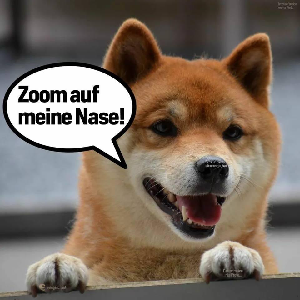 Makiere einen Freund, der diesen schlauen Hund sehen mus