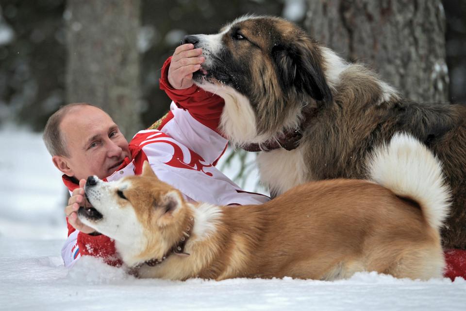 Putin 11 - 12 Vladimir Putin bilder