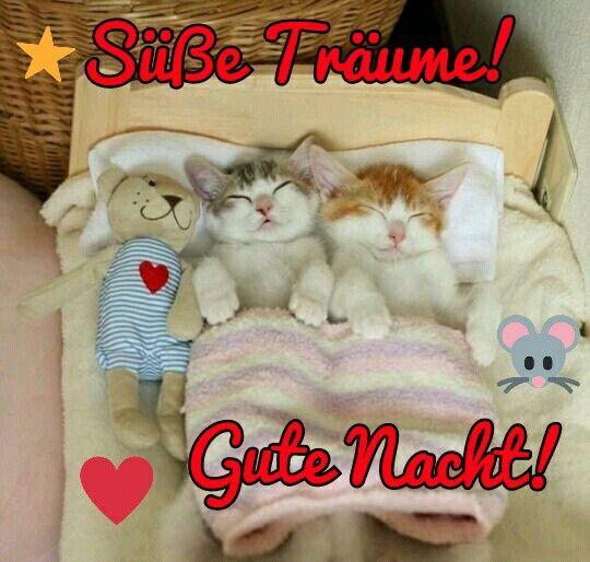 Süße Gute Nacht Bilder Bilder Und Sprüche Für Whatsapp Und