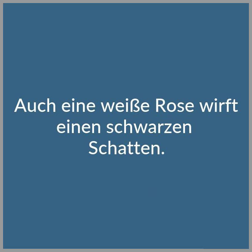 Auch eine weisse rose wirft einen schwarzen schatten - Auch eine weisse rose wirft einen schwarzen schatten