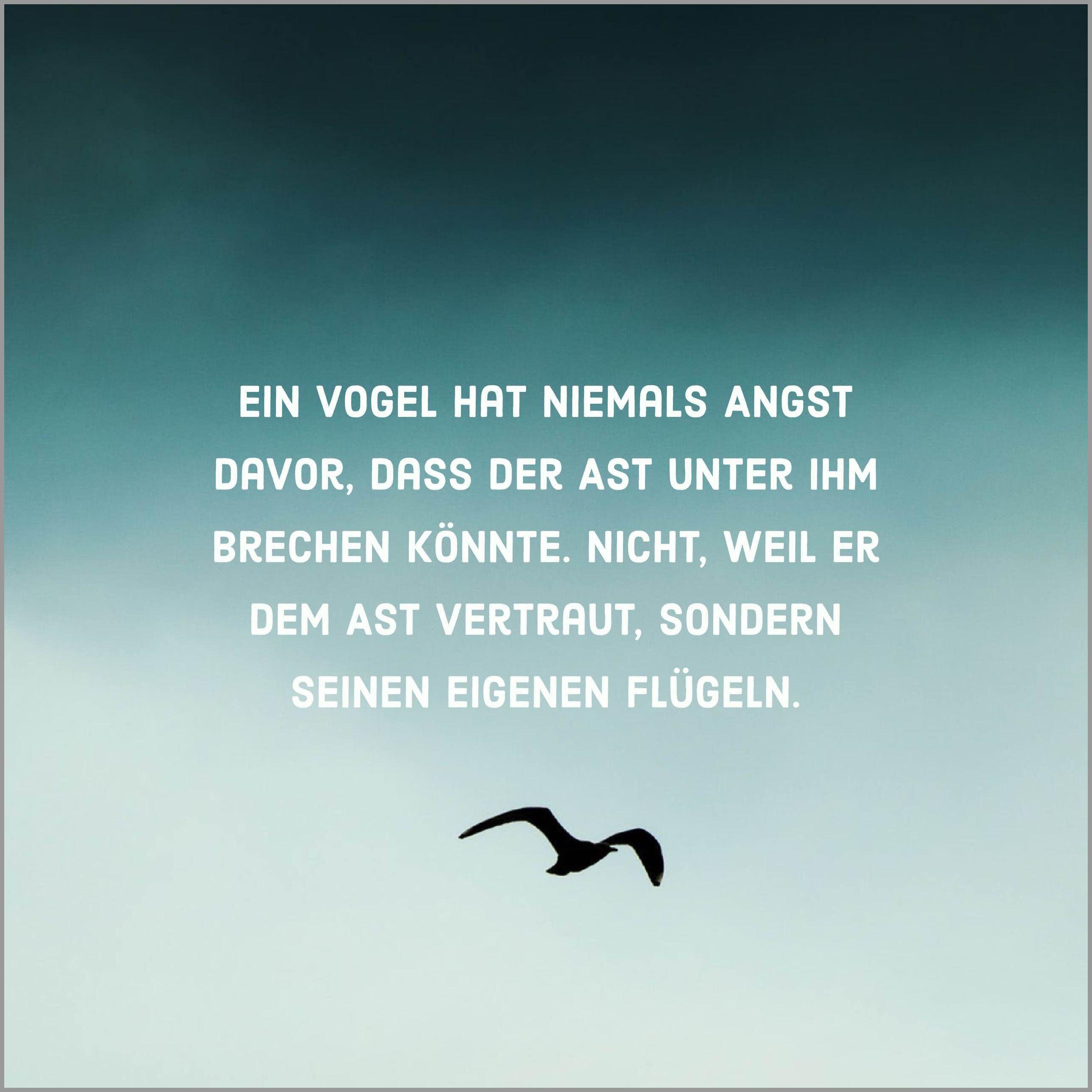 Ein vogel hat niemals angst davor dass der ast unter ihm brechen koennte nicht weil er dem ast vertraut sondern seinen eigenen fluegeln - Ein vogel hat niemals angst davor dass der ast unter ihm brechen koennte nicht weil er dem ast vertraut sondern seinen eigenen fluegeln