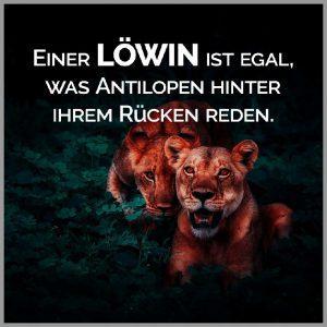 Einer loewin ist egal was antilopen hinter ihrem ruecken reden 300x300 - Einer loewin ist egal was antilopen hinter ihrem ruecken reden