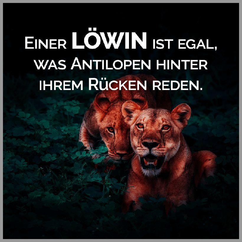 Einer loewin ist egal was antilopen hinter ihrem ruecken reden - Einer loewin ist egal was antilopen hinter ihrem ruecken reden