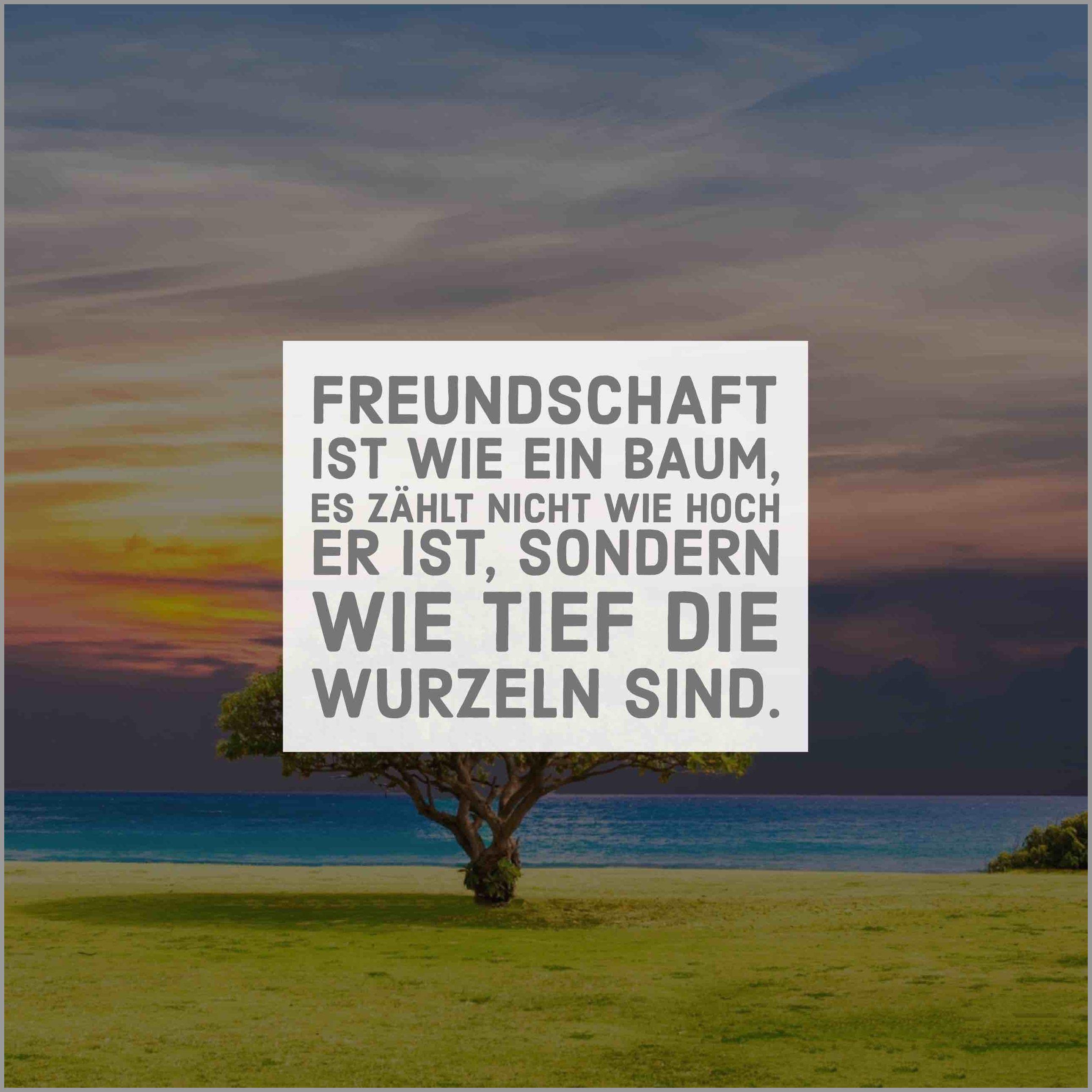 Freundschaft ist wie ein baum es zaehlt nicht wie hoch er ist sondern wie tief die wurzeln sind - Freundschaft ist wie ein baum es zaehlt nicht wie hoch er ist sondern wie tief die wurzeln sind