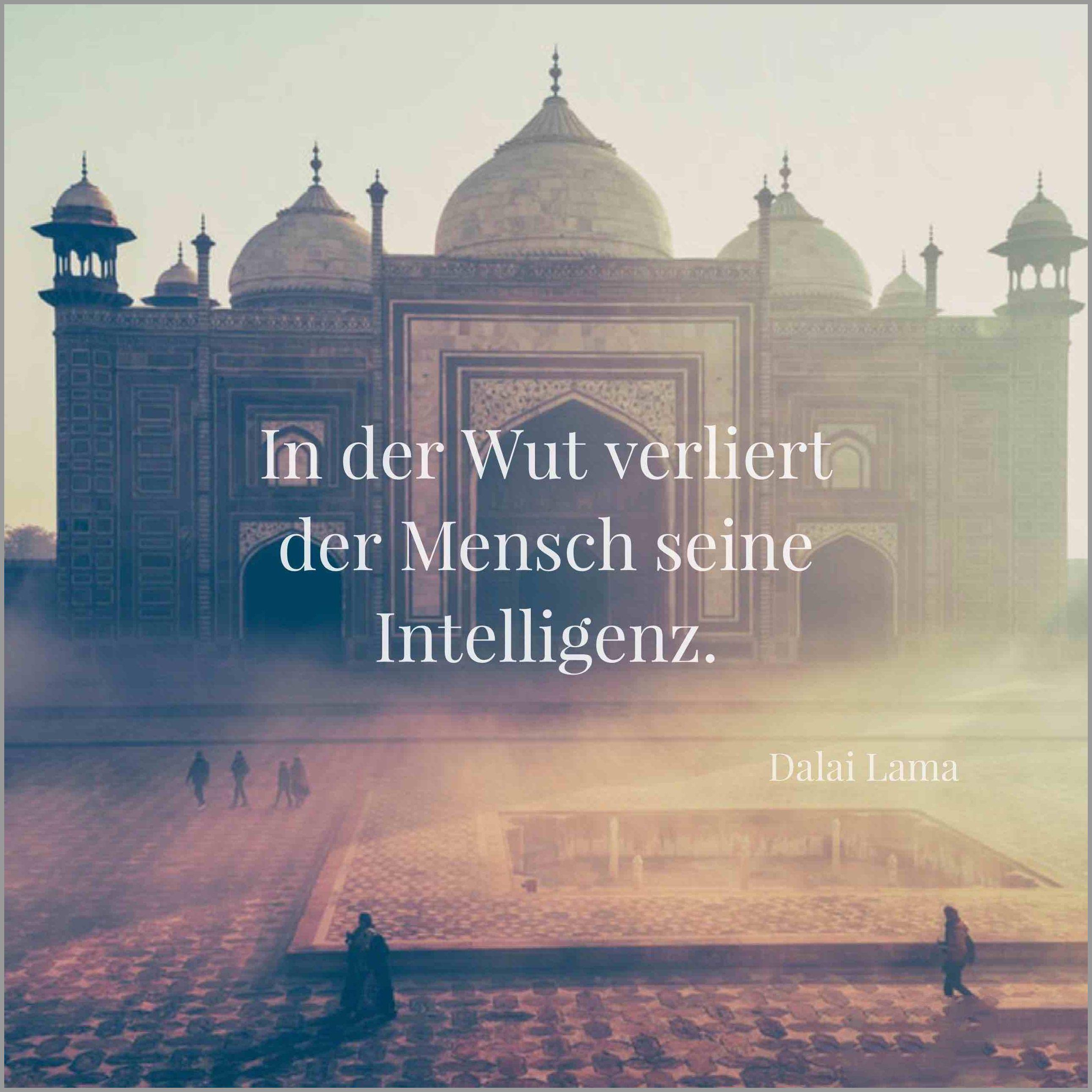 In der wut verliert der mensch seine intelligenz - In der wut verliert der mensch seine intelligenz