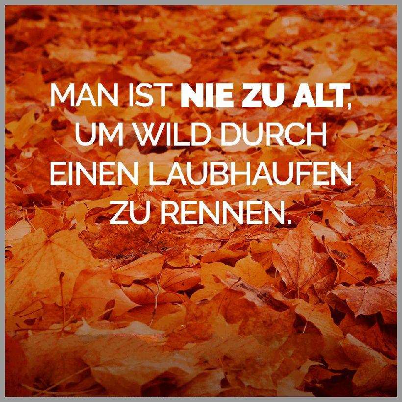 Man ist nie zu alt um wild durch einen laubhaufen zu rennen - Man ist nie zu alt um wild durch einen laubhaufen zu rennen