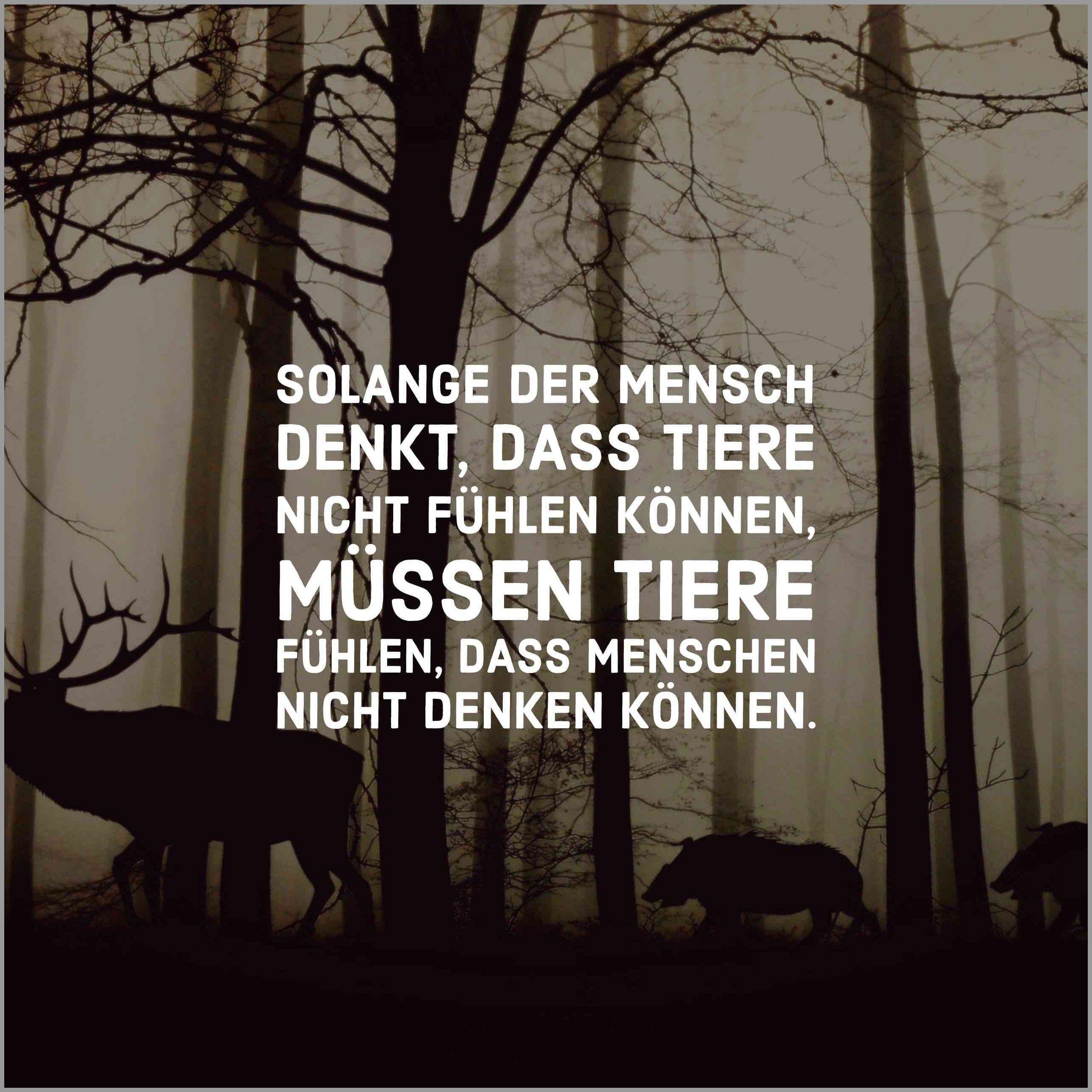 Solange der mensch denkt dass tiere nicht fuehlen koennen muessen tiere fuehlen dass menschen nicht denken koennen - Solange der mensch denkt dass tiere nicht fuehlen koennen muessen tiere fuehlen dass menschen nicht denken koennen