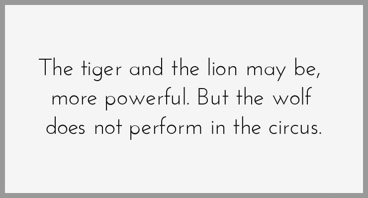 The tiger and the lion may be more powerful but the wolf does not perform in the circus - The tiger and the lion may be more powerful but the wolf does not perform in the circus