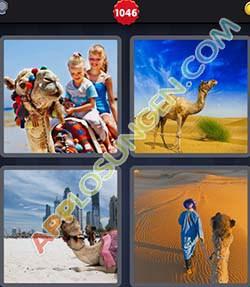 4 bilder 1 wort level 1046 lösung KAMEL - 4 bilder 1 wort level 1046 lösung KAMEL