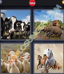4 bilder 1 wort level 1056 lösung HERDE - 4 bilder 1 wort level 1056 lösung HERDE