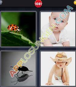 4 bilder 1 wort level 1081 lösung KRABBELN - 4 bilder 1 wort level 1081 lösung KRABBELN