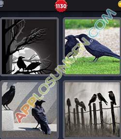 4 bilder 1 wort level 1130 lösung KRAHE - 4 bilder 1 wort level 1130 lösung KRAHE