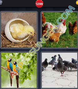 4 bilder 1 wort level 1299 lösung GEFIEDER - 4 bilder 1 wort level 1299 lösung GEFIEDER