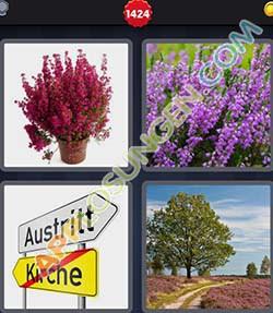 4 bilder 1 wort level 1424 lösung HEIDE - 4 bilder 1 wort level 1424 lösung HEIDE
