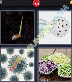 4 bilder 1 wort level 1438 lösung KEIM - 4 bilder 1 wort level 1438 lösung KEIM
