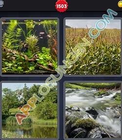 4 bilder 1 wort level 1503 lösung BIOTOP - 4 bilder 1 wort level 1503 lösung BIOTOP