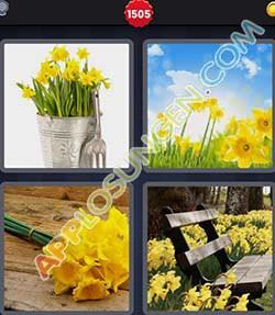 4 bilder 1 wort level 1505 lösung NARZISSE - 4 bilder 1 wort level 1505 lösung NARZISSE