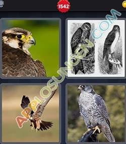 4 bilder 1 wort level 1542 lösung FALKE - 4 bilder 1 wort level 1542 lösung FALKE