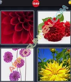 4 bilder 1 wort level 1549 lösung DAHLIN - 4 bilder 1 wort level 1549 lösung DAHLIN