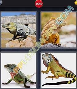 4 bilder 1 wort level 1565 lösung LEGUAN - 4 bilder 1 wort level 1565 lösung LEGUAN