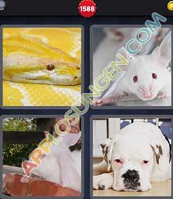 4 bilder 1 wort level 1588 lösung ALBINO - 4 bilder 1 wort level 1588 lösung ALBINO