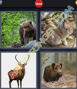 4 bilder 1 wort level 1606 lösung WILD - 4 bilder 1 wort level 1606 lösung WILD