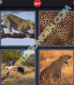 4 bilder 1 wort level 1817 lösung LEOPARD - 4 bilder 1 wort level 1817 lösung LEOPARD