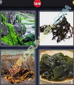 4 bilder 1 wort level 1818 lösung ALGEN - 4 bilder 1 wort level 1818 lösung ALGEN