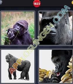 4 bilder 1 wort level 1823 lösung GORILLA - 4 bilder 1 wort level 1823 lösung GORILLA