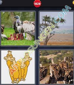 4 bilder 1 wort level 1828 lösung GEIER - 4 bilder 1 wort level 1828 lösung GEIER