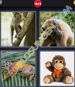 4 bilder 1 wort level 1843 lösung AFFE - 4 bilder 1 wort level 1843 lösung AFFE