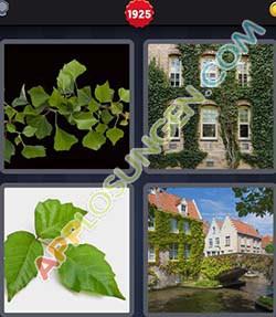 4 bilder 1 wort level 1925 lösung EFEU - 4 bilder 1 wort level 1925 lösung EFEU