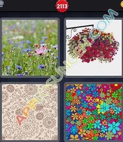 4 bilder 1 wort level 2113 lösung FLORAL - 4 bilder 1 wort level 2113 lösung FLORAL