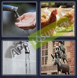4 bilder 1 wort level 224 lösung HAHN - 4 bilder 1 wort level 224 lösung HAHN