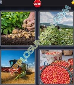 4 bilder 1 wort level 2248 lösung ERNTEN - 4 bilder 1 wort level 2248 lösung ERNTEN