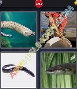 4 bilder 1 wort level 2265 lösung AAL - 4 bilder 1 wort level 2265 lösung AAL