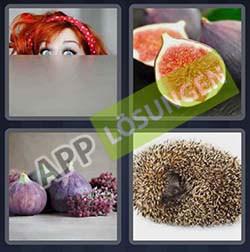 4 bilder 1 wort level 248 lösung FEIGE - 4 bilder 1 wort level 248 lösung FEIGE