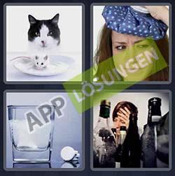 4 bilder 1 wort level 25 lösung KATER - 4 bilder 1 wort level 25 lösung KATER