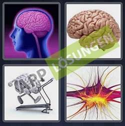 4 bilder 1 wort level 275 lösung GEHIRN - 4 bilder 1 wort level 275 lösung GEHIRN