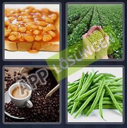 4 bilder 1 wort level 301 lösung BOHNEN - 4 bilder 1 wort level 301 lösung BOHNEN