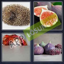 4 bilder 1 wort level 49 lösung FEIGE - 4 bilder 1 wort level 49 lösung FEIGE