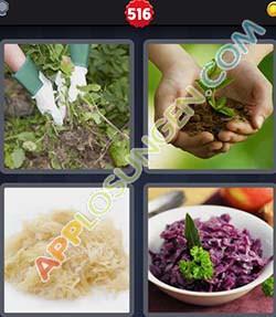 4 bilder 1 wort level 516 lösung KRAUT - 4 bilder 1 wort level 516 lösung KRAUT