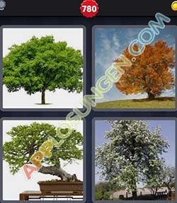 4 bilder 1 wort level 780 lösung LAUBBAUM - 4 bilder 1 wort level 780 lösung LAUBBAUM