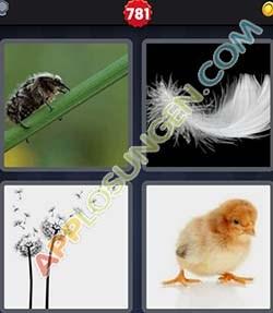 4 bilder 1 wort level 781 lösung FLAUM - 4 bilder 1 wort level 781 lösung FLAUM