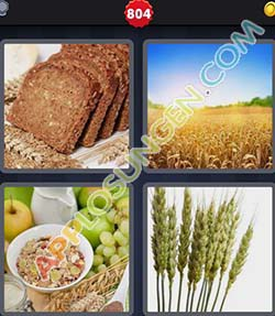 4 bilder 1 wort level 804 lösung GETREIDE - 4 bilder 1 wort level 804 lösung GETREIDE