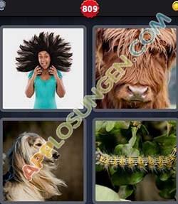 4 bilder 1 wort level 809 lösung HAARIG - 4 bilder 1 wort level 809 lösung HAARIG