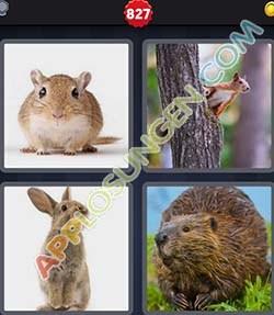 4 bilder 1 wort level 827 lösung NAGETIER - 4 bilder 1 wort level 827 lösung NAGETIER