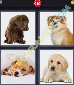 4 bilder 1 wort level 910 lösung WELPE - 4 bilder 1 wort level 910 lösung WELPE