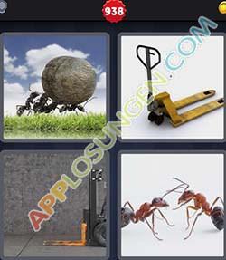 4 bilder 1 wort level 938 lösung AMEISE - 4 bilder 1 wort level 938 lösung AMEISE