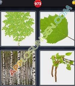 4 bilder 1 wort level 973 lösung BIRKE - 4 bilder 1 wort level 973 lösung BIRKE